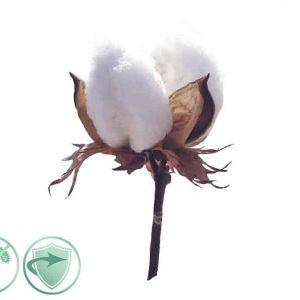 Soft Cotton – dezinfekčný aroma olej