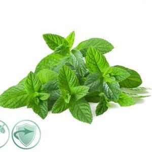 Mint Fresh – dezinfekčný aroma olej