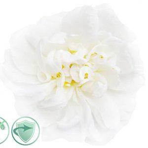 White Flower-dezinfekčný aroma olej